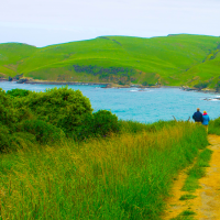 The Untouched World - Walking path in Catlin's Region of New Zealand